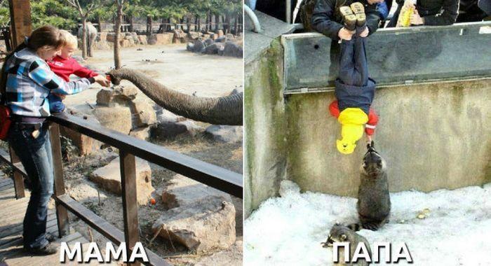 Мама с дочкой кормят слоника а папа опустил сына к енотам в вальер