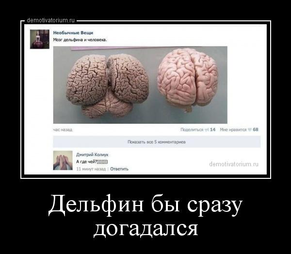 Мозг дельфина и человека угадай с трех раз