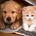 Родители обучайте детей заботиться о животных
