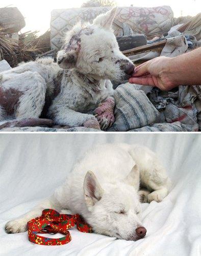 Спасена собака из кучи мусора