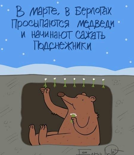 подсненики сажет медведь