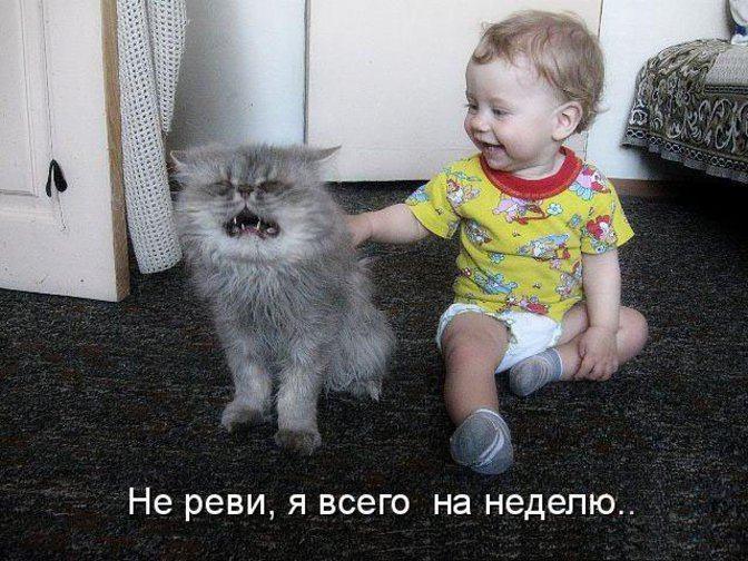 дети любят животных