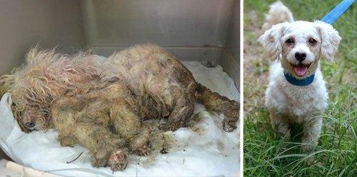 2 Собака спасена от ужасной жизни