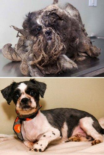 3 Собака которую спасли