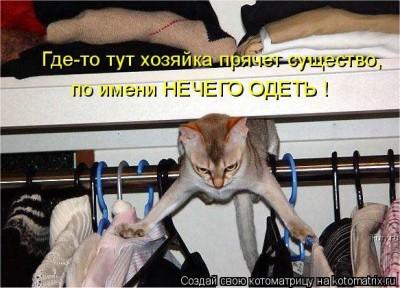 нечего надеть кот