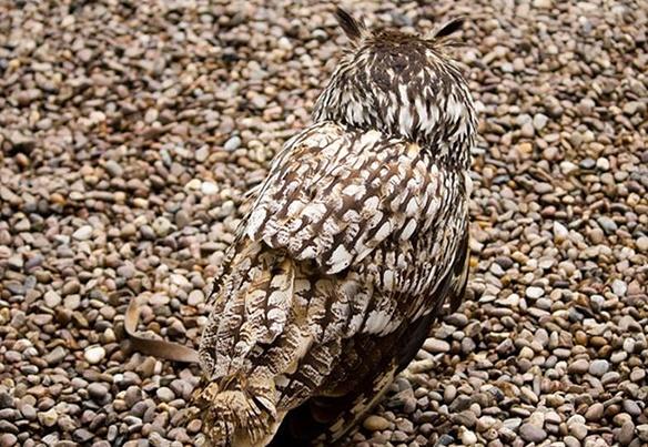 тест на внимательность найди сову