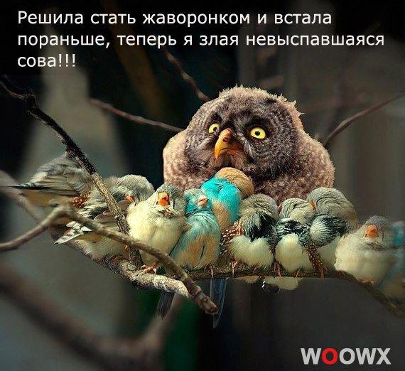 жаворонок или сова как выспаться