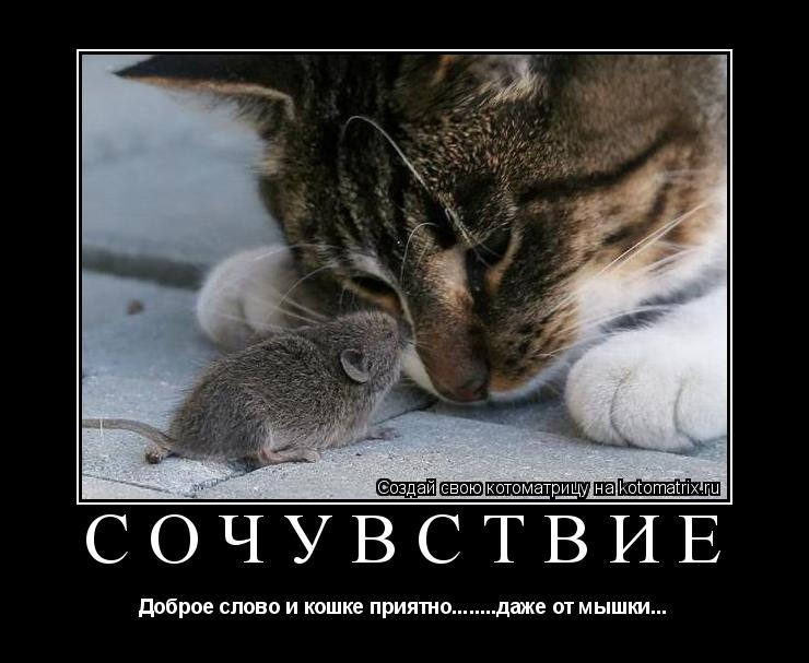 ласковое слово и кошке приятно от кошки