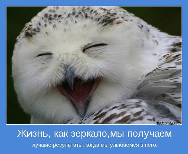 сова думает о жизни