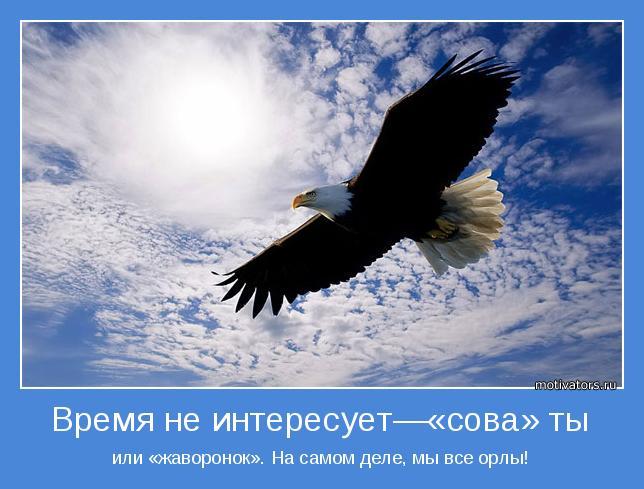 сова или жаворонок или орел