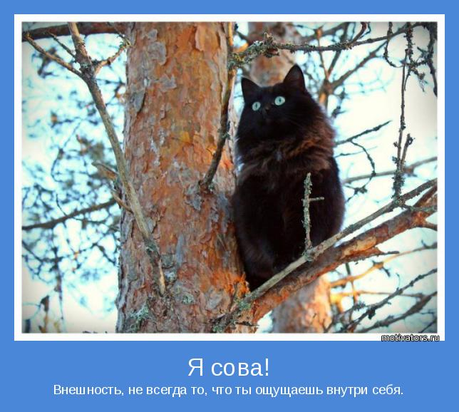 сова или кот или жаворонок