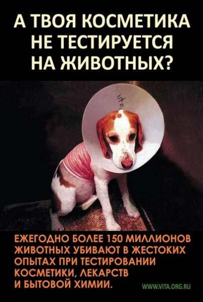этичный образ жизни забота о животных