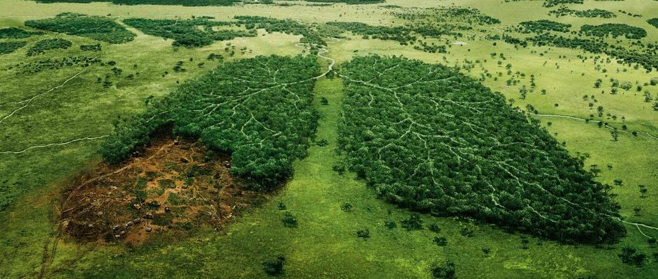 этичный образ жизни не вырубать леса легкие планеты