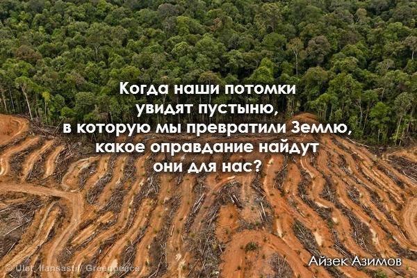 этичный образ жизни не вырубать леса