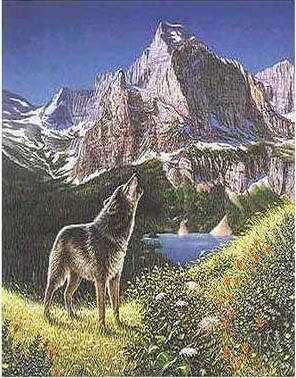 тесты на внимательность найди 4 волка